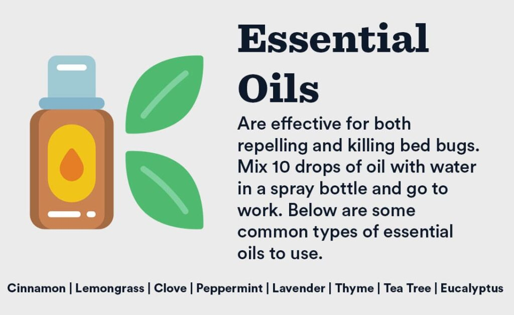kill bed bugs essential oils