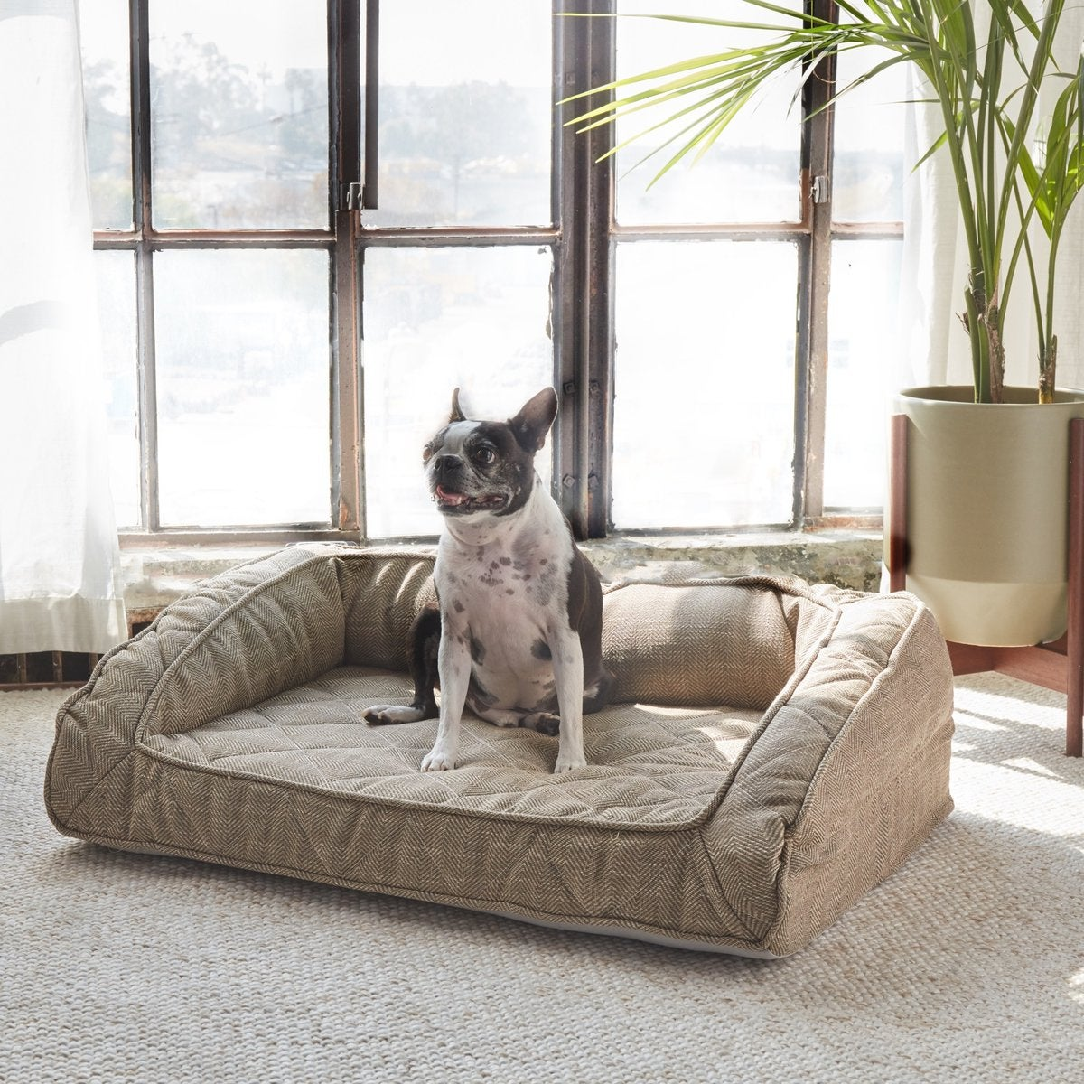 Runyon Orthopedic Dog Bed