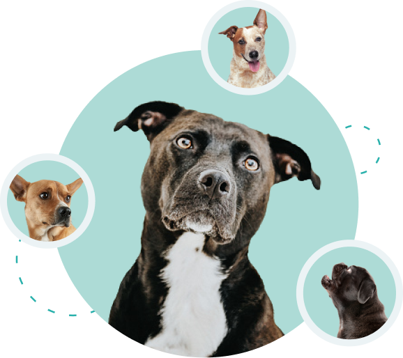 National Pet Wellness Month accompanying decoration