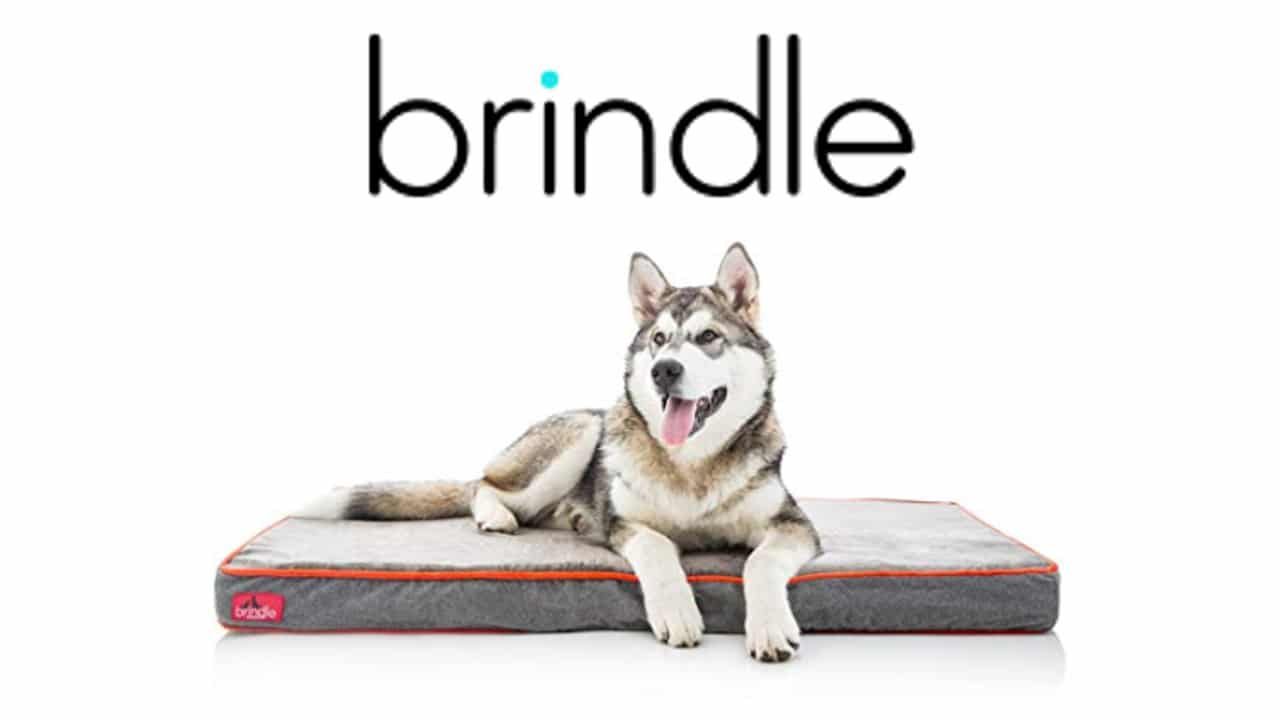 brindle designer memory foam dog bed large and small dogs