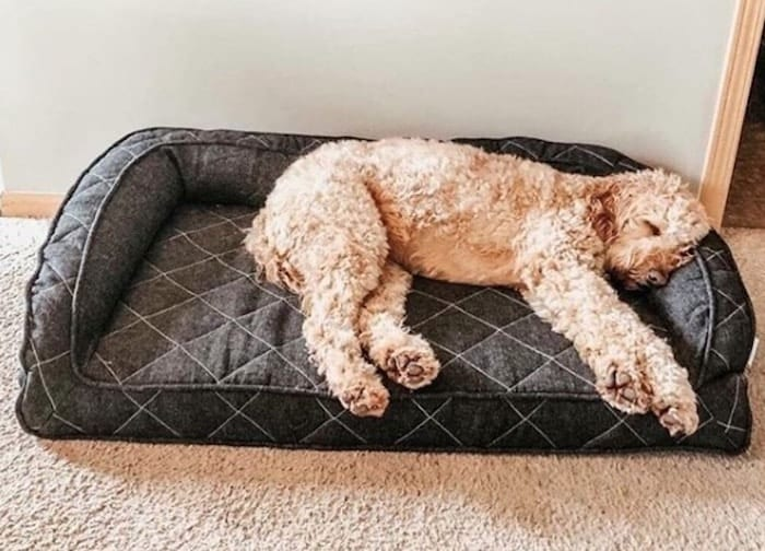runyon dog bed brentwood home