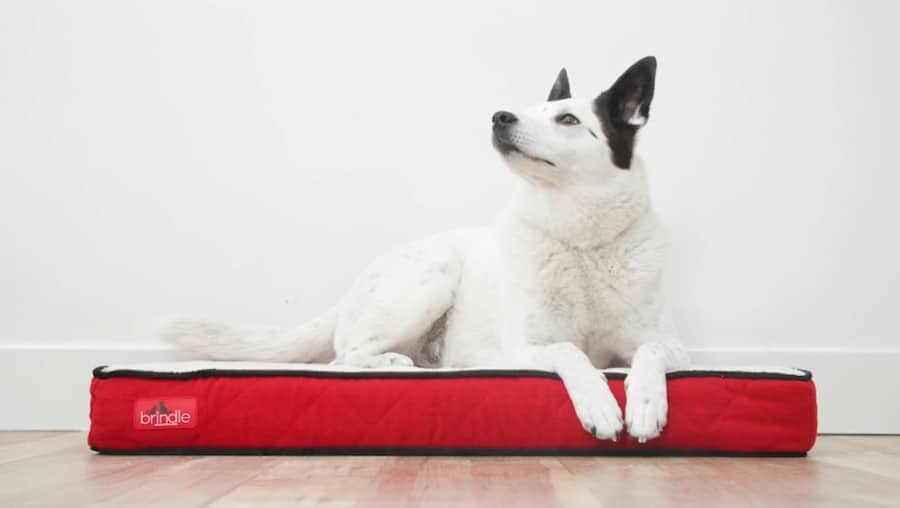 brindle memory foam dog bed