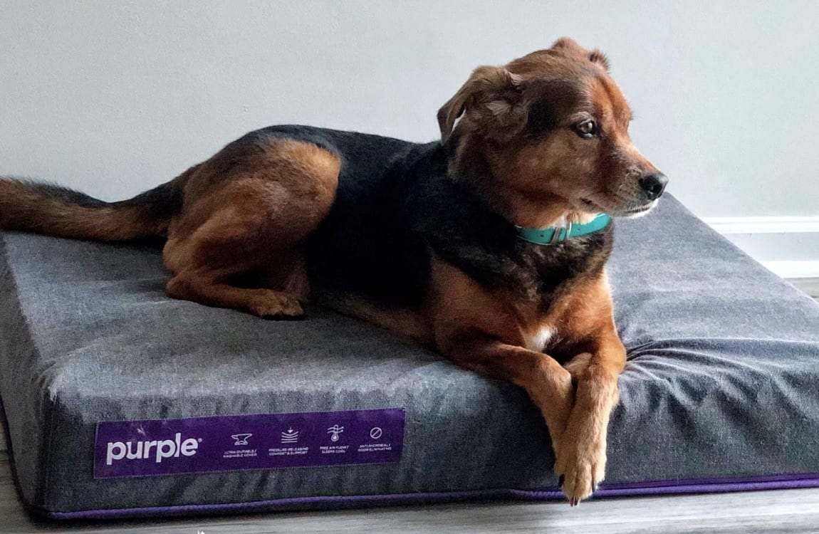 purple dog bed review mattress topper