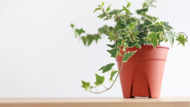 How Adding Plants To Your Bedroom Benefits Sleep
